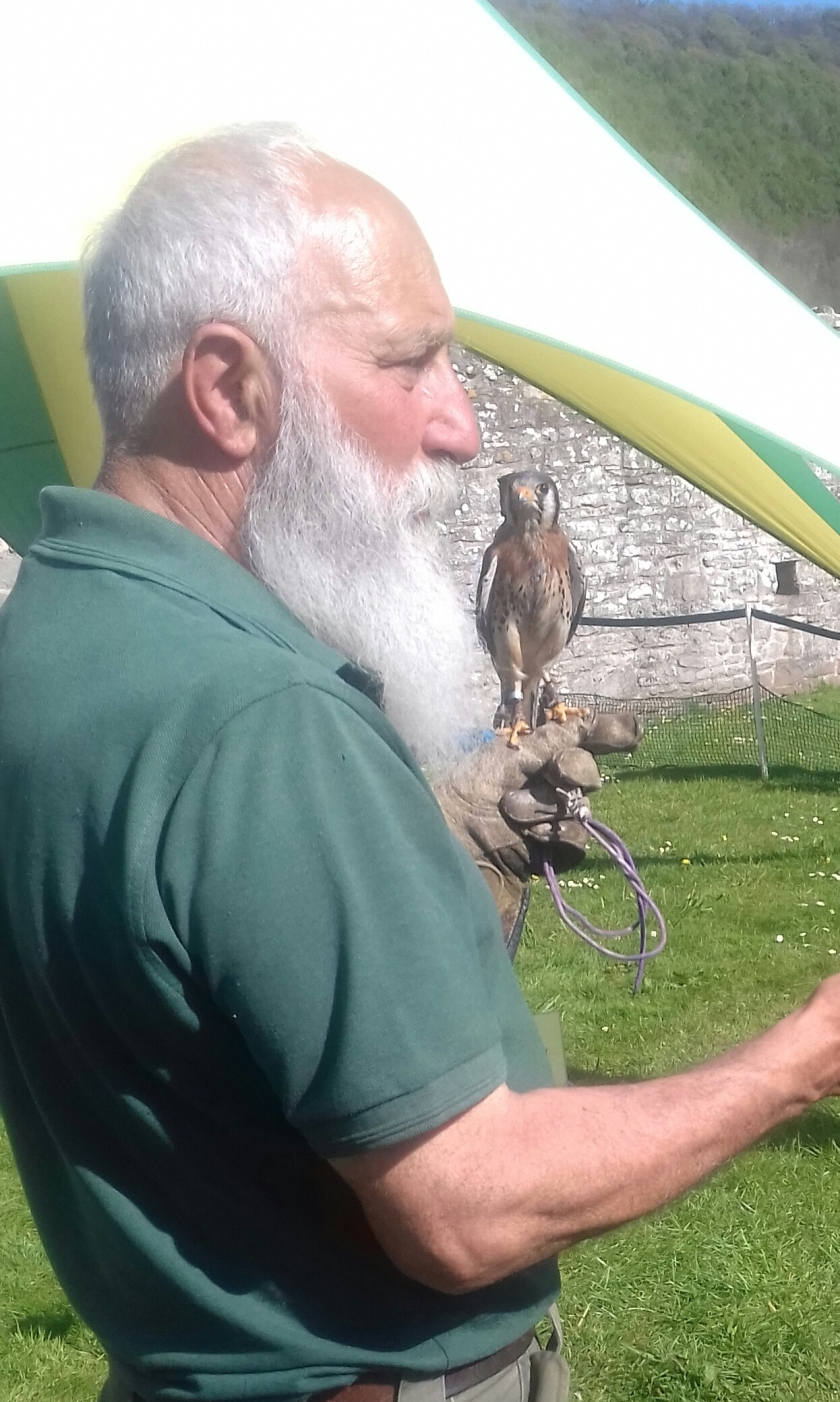 A falconer with a very long white beard holding a kestrel