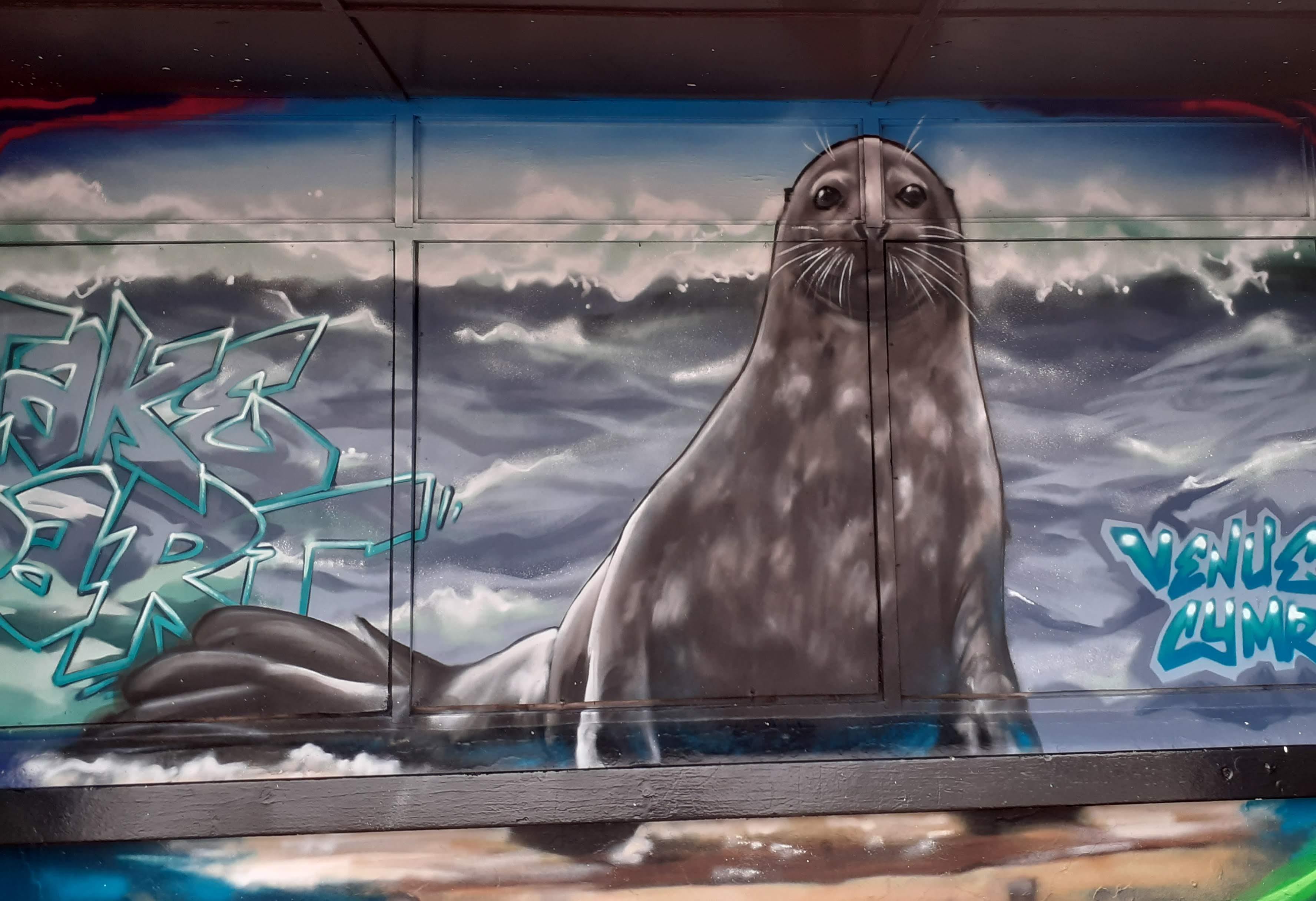 A walrus coming on land Llandudno